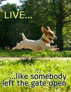 go life lens